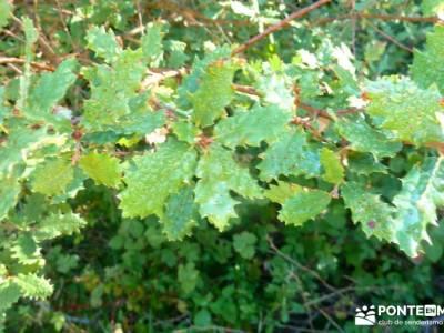 Hayedos Rioja Alavesa- Sierra Cantabria- Toloño;trekking material viaje puente de mayo viajes en ma